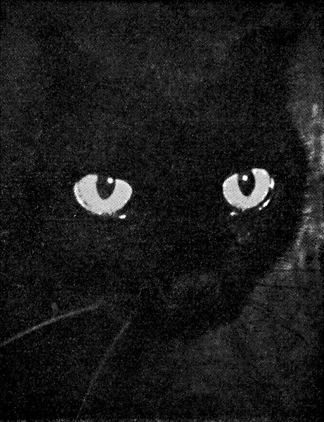 Wonders of Life (Black Cat), 2009