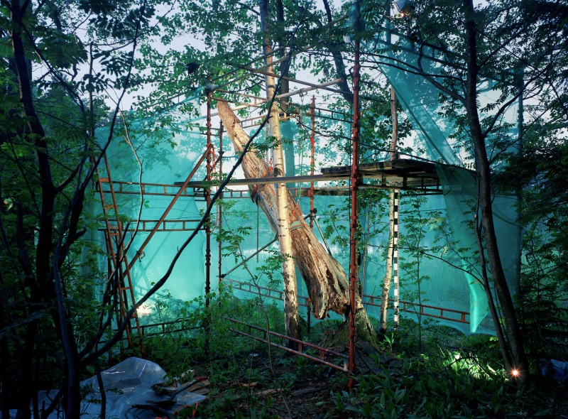 Restoration 6 - inside forest, 2005