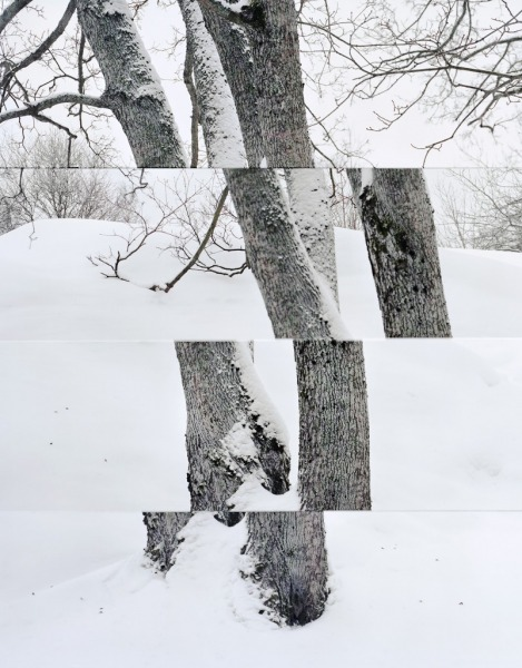 Mikko Rikala Composition with several perspectives and a maple tree, 2019