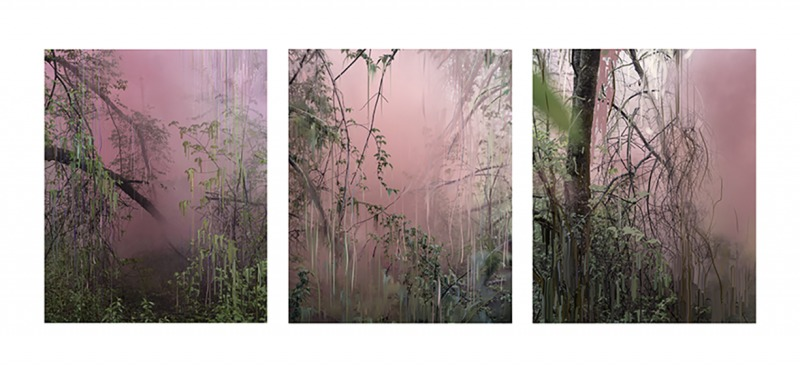 Untitled (Forest 17, 18, 19), 2019