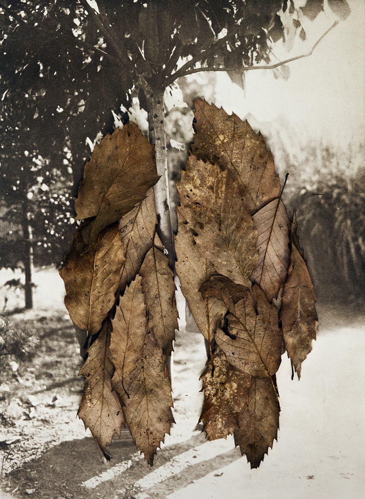 Leaves II (the couple), 2013