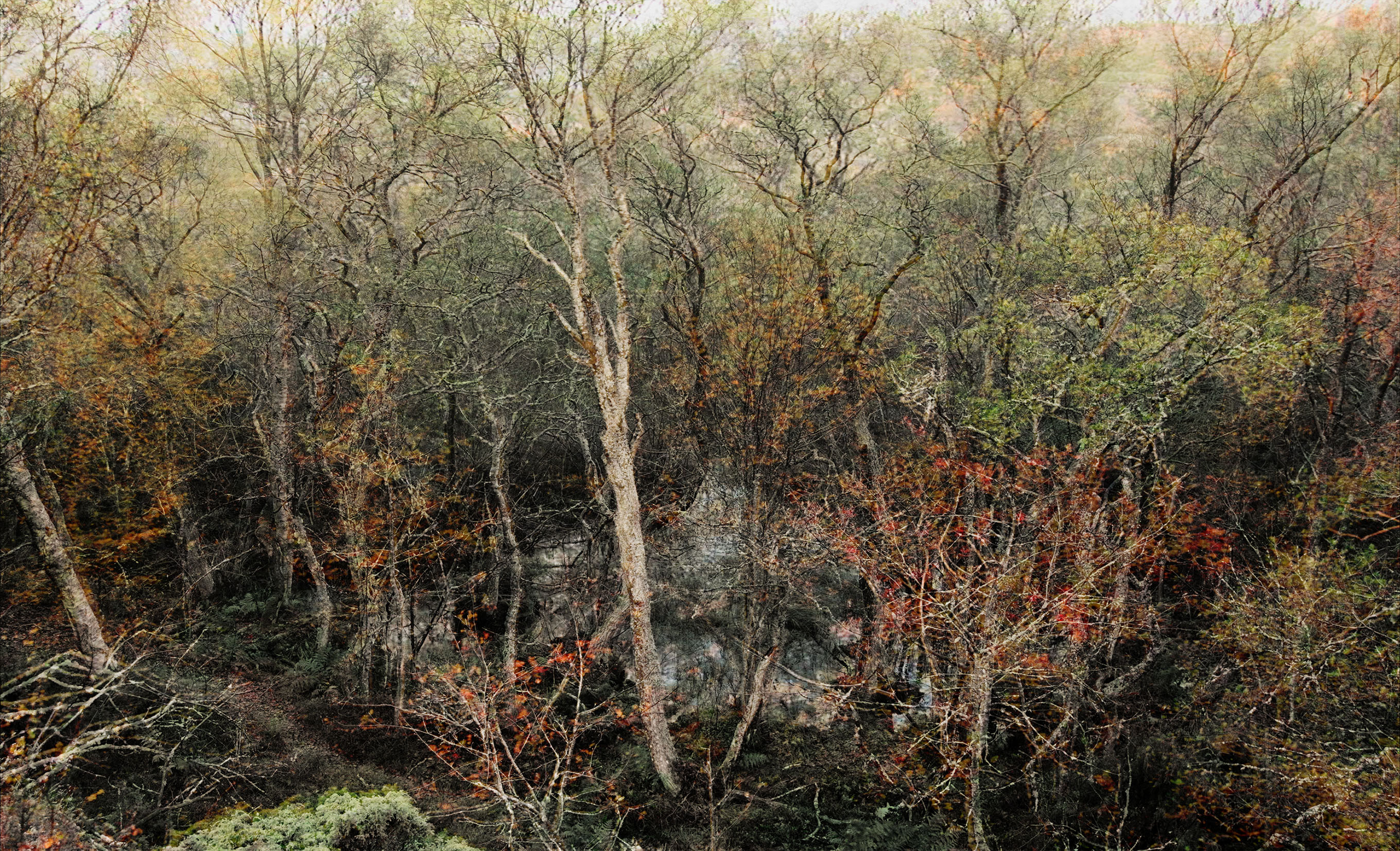 Forest (Tree and Pond ), 2009